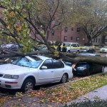 tree damage in queens from telegraph.co.uk