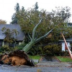 tree down garden city