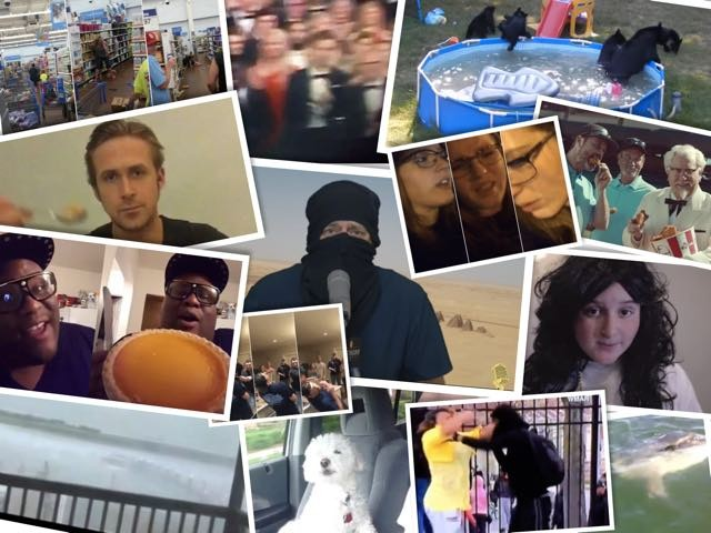 best viral videos 2015
